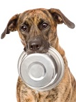 Dogs Love Healthy Pet Food